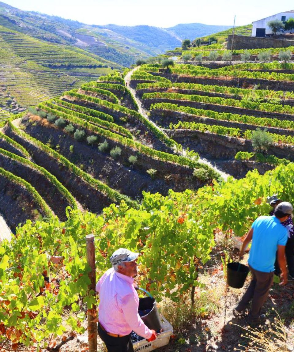 heart-and-soul-of-douro-wine-region-8