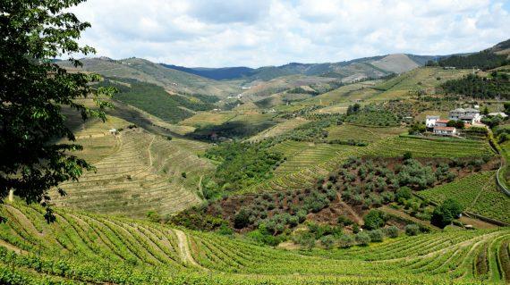 resize_douro valley (4)