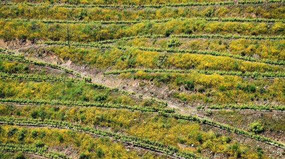 resize_douro valley (6)